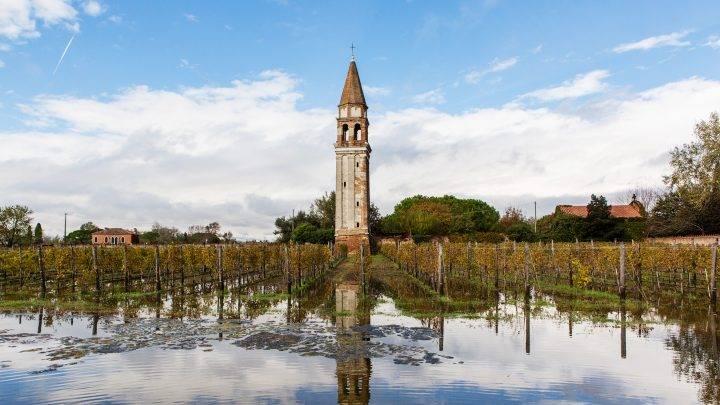 The Ancient Vines of the Venetian Lagoon